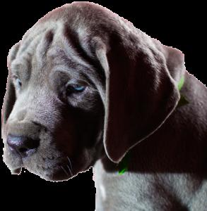 puppy-gourmet400gif-293x300