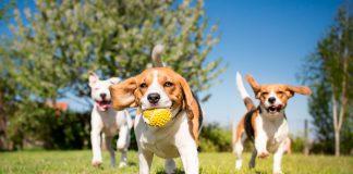 cachorro-socializando-con-otros-perros