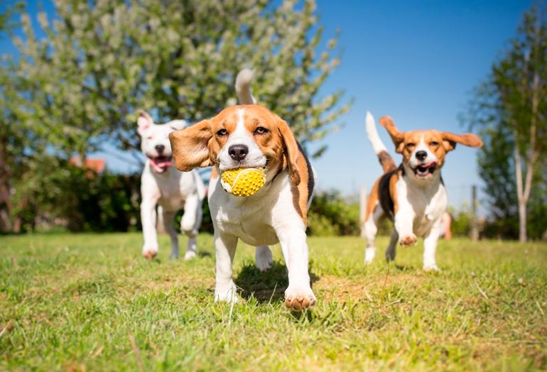 """Resultado de imagen de socializar cachorro con otros perros"""""""