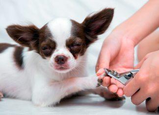 cortando-uñas-a-un-perro