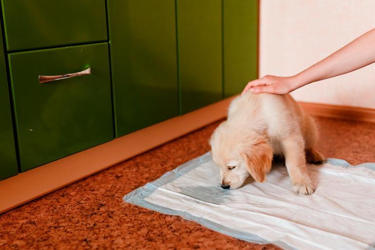 felicitando-a-cachorro-que-ha-orinado-en-su-sitio