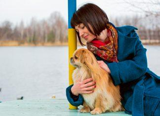 humana-acariciando-a-perro-pekines