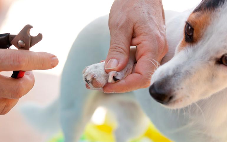 perro-con-las-uñas-largas