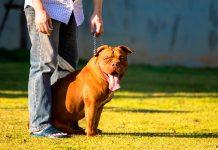 perro-guardián