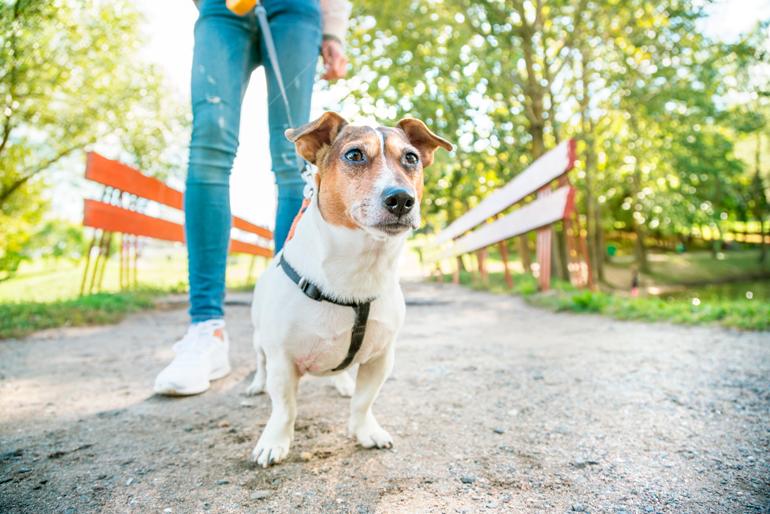 perro-paseando-por-el-parque