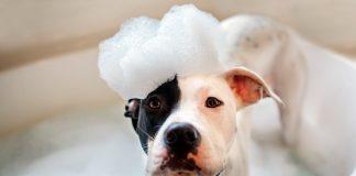 bañando-a-un-perro