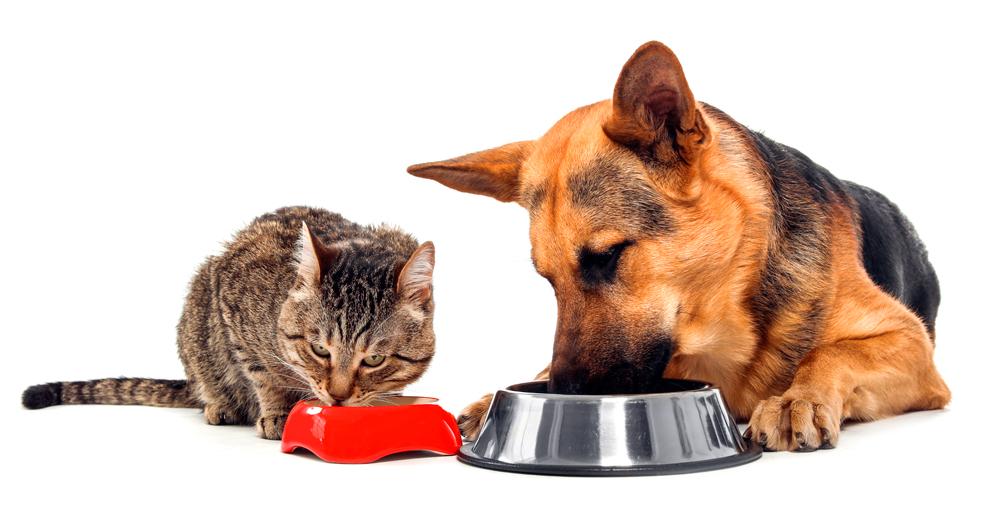 perro-y-gato-comiendo
