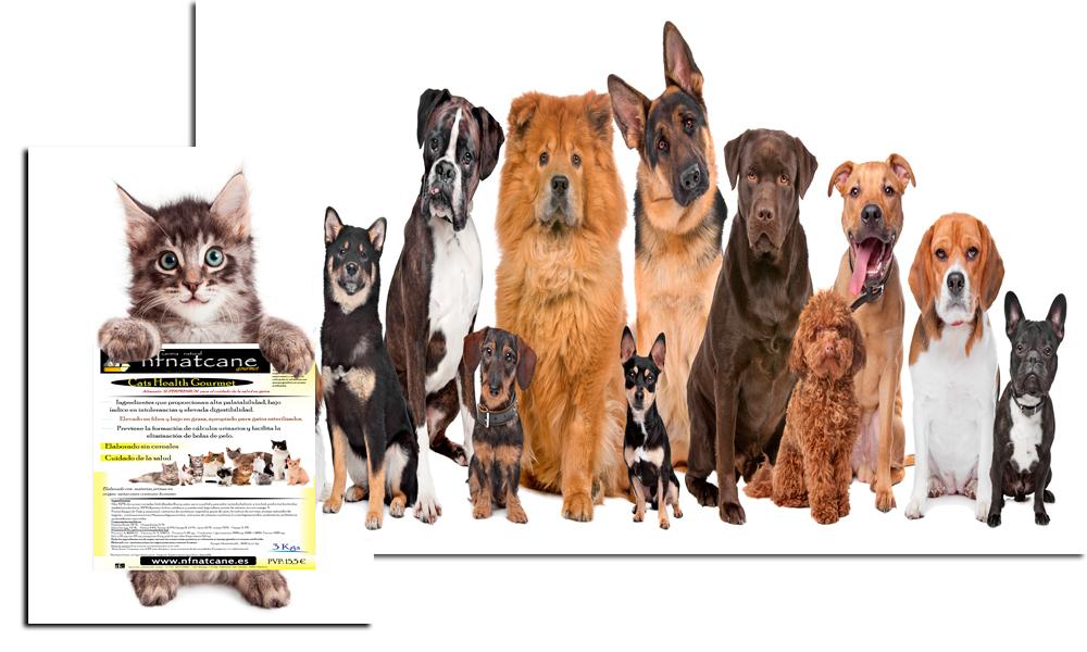 perros-y-gatos-home
