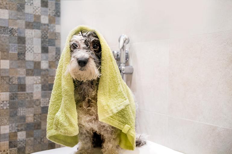 secando-a-un-perro-tras-el-baño