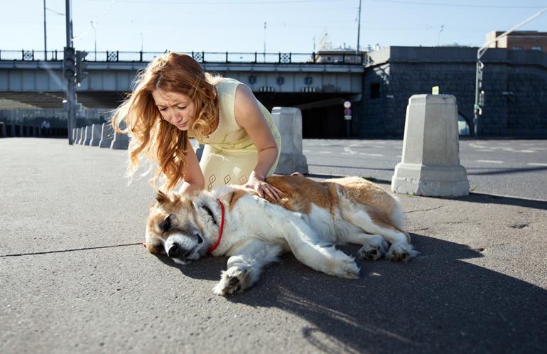Mujer-atendiendo-a-un-perro-con-golpe-de-calor