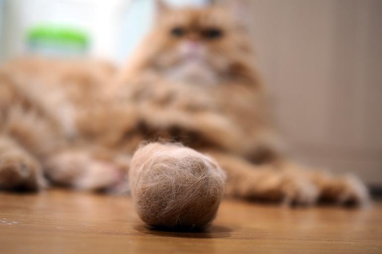 bola-de-pelo-formada-por-pelos-de-gato