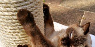 gato-usando-un-rascador-vertical