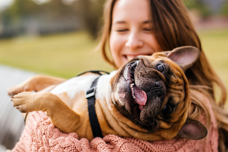 perro-castrado-contento
