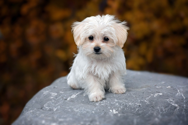 cachorrito-sin-nombre