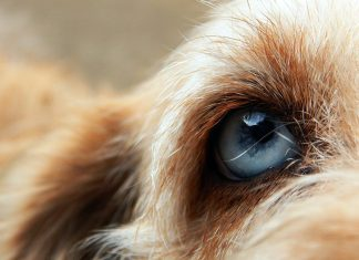 ojo-de-perro