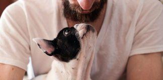 perro-comunicandose-con-su-dueño