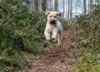 perro-en-el-bosque