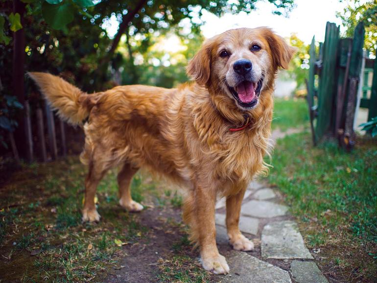 perro-esperando-para-salir-a-pasear