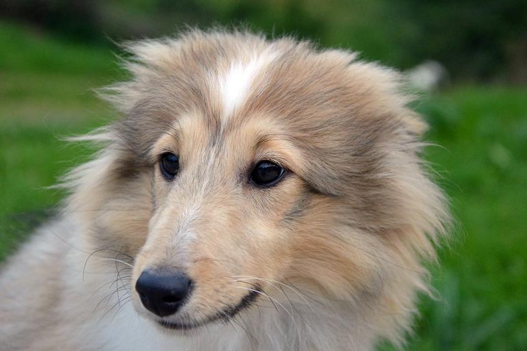 perro-observando-a-su-dueño