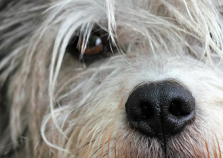 recortar-pelos-de-los-ojos-para-evitar-conjuntivitis