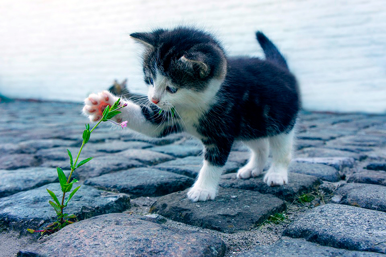 gatita-acariciando-una-flor