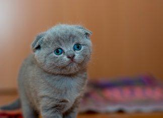 gatito-despues-de-hacer-diarrea