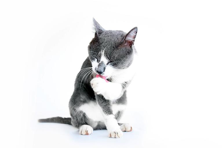 gato-aseandose