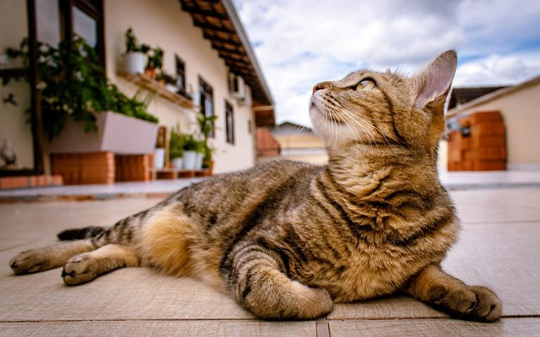 gato-tumbado-en-la-calle