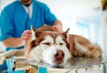 perro-con-tos-de-las-perreras-en-consulta-veterinaria