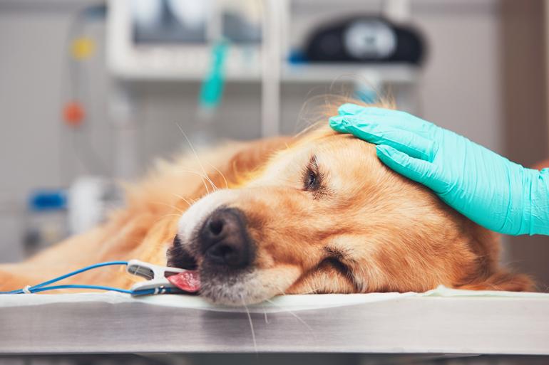 perro-en-el-veterinario-para-castracion