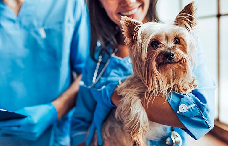 perro-en-tratamiento-para-la-dermatitis