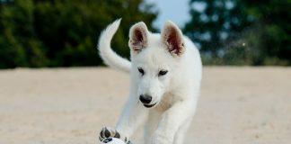 perro-jugando-en-la-arena-de-la-playa