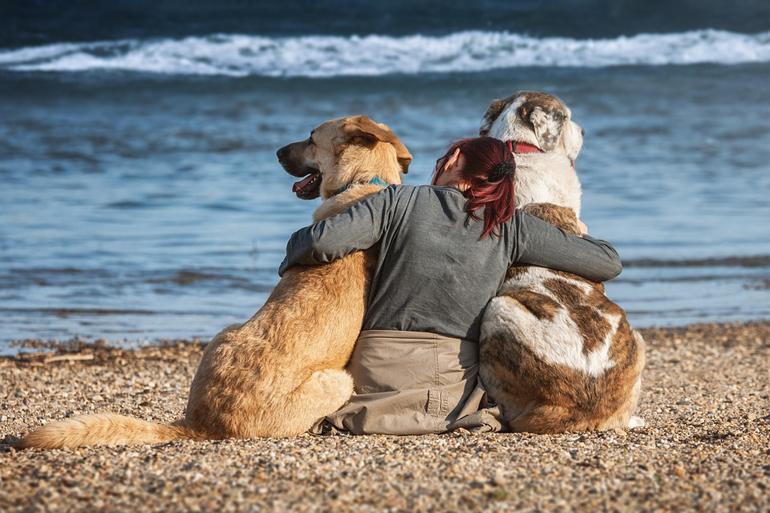 perros-castrados-sin-probelmas-de-conducta