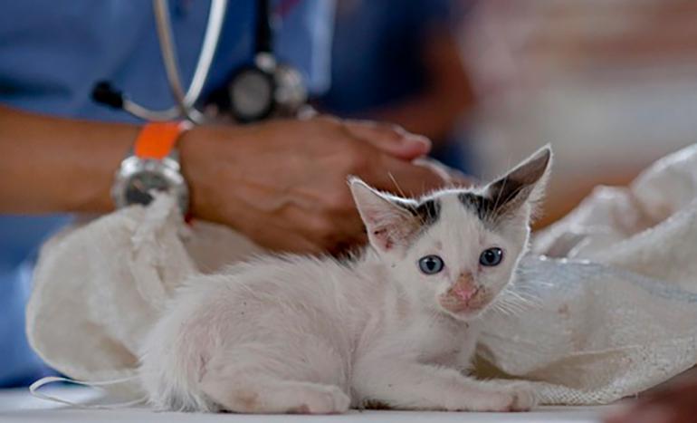 vacunación-de-gatos