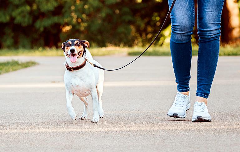 perro-bodeguero-paseando-con-su-dueña