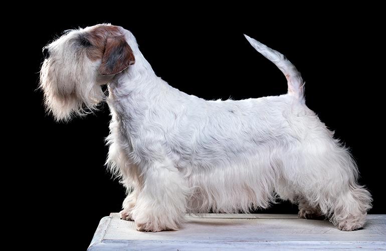 Terrier-Checo-posando
