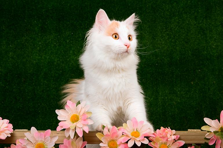 Van-turco-con-flores