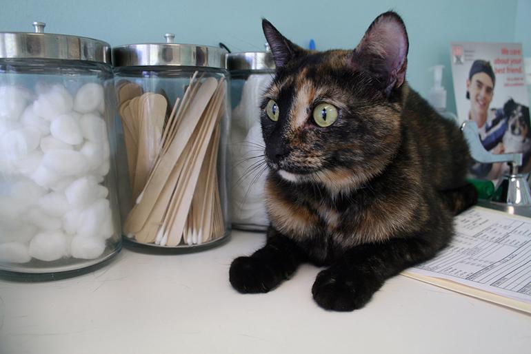 gato-en-consulta-veterinaria