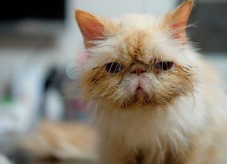 gato-en-el-veterinario