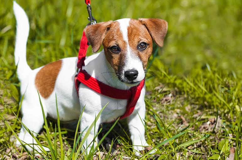 cachorro-de-perro-con-arnés