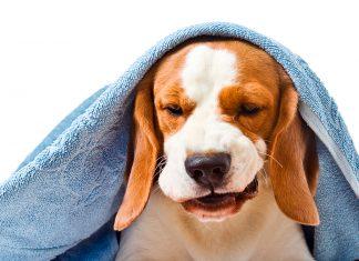 perro-con-tos