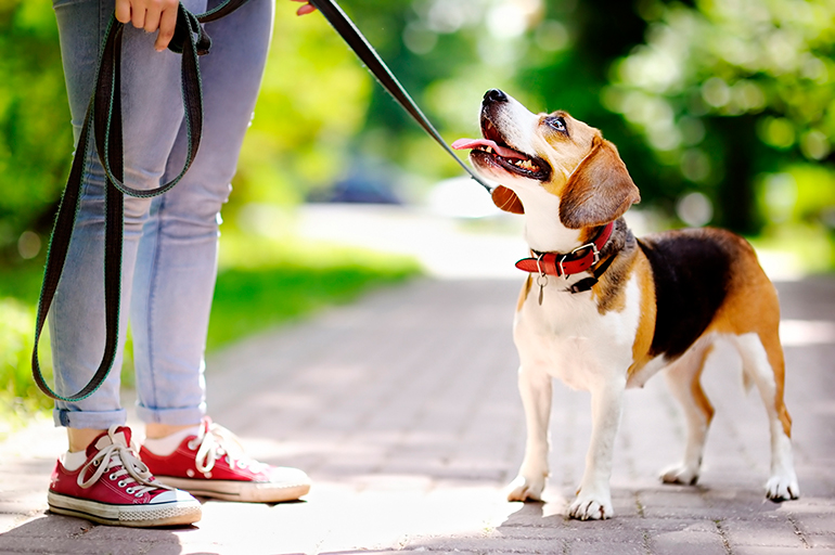 perro-paseando-con-collar