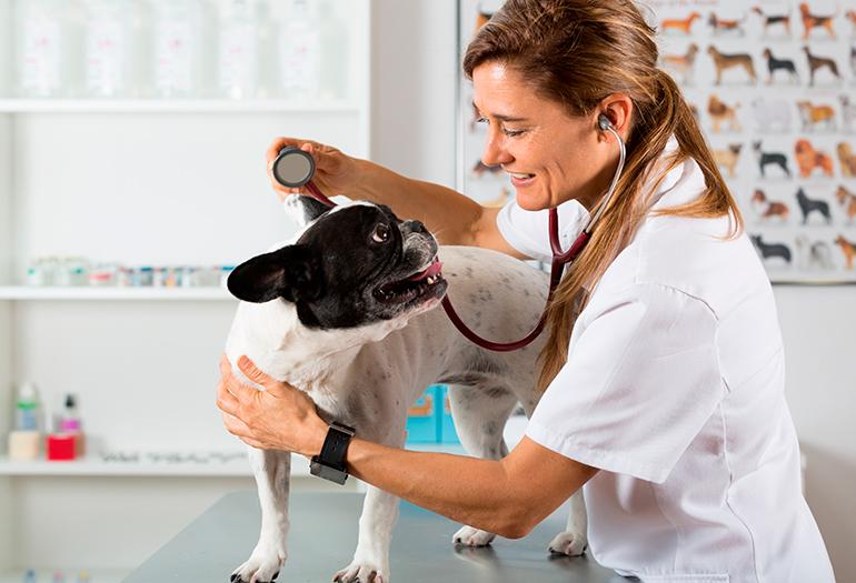 revisión-veterinaria-a-un-perro