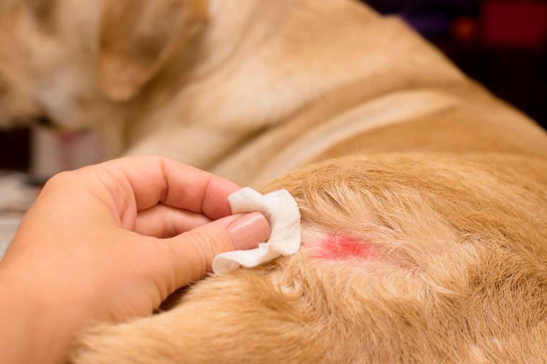 humano-curando-una-dermatitis-en-su-perro
