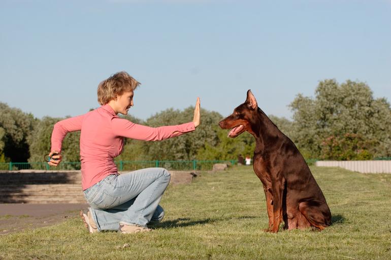 perro-esperando-la-pelota