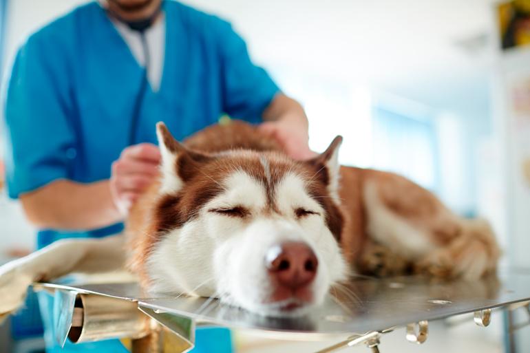 perro-sedado-para-realizar-pruebas-de-corazón