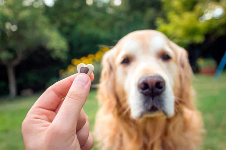 tecnica-de-adiestramiento-posicitivo-con-un-perro