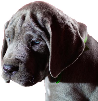 puppy-gourmet400gif